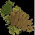 araucaria-icon2